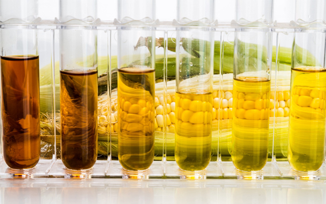The Not-So-Sweet Truth About High Fructose Corn Syrup
